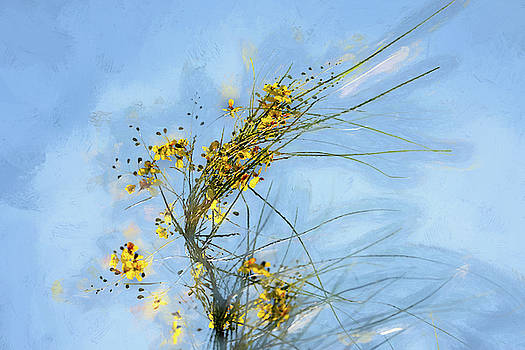Retama in the Wind by Debra Martz