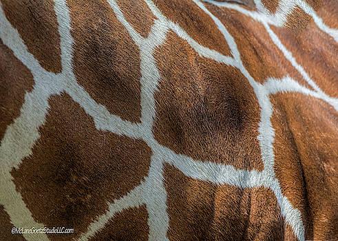 Reticulated Giraffe Hide by LeeAnn McLaneGoetz McLaneGoetzStudioLLCcom