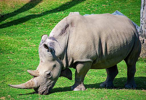 Rhinoceros by Anthony Jones