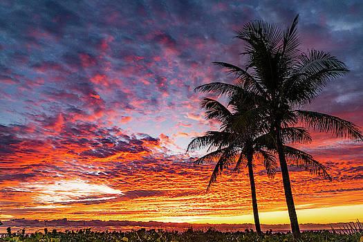 Rich Pastel Palm Sunrise Delray Beach Florida by Lawrence S Richardson Jr