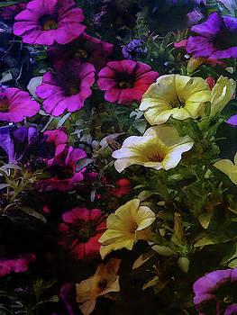 Rich Petunias 6551 IDP_2 by Steven Ward