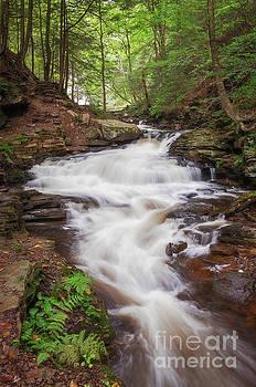 Rickett's Glen Waterfall II by Sharon Seaward