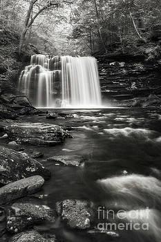 Rickett's Glen Waterscape by Sharon Seaward