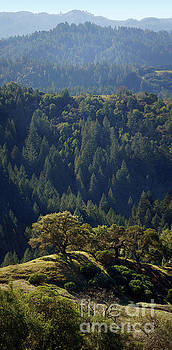 Ridges of Forested Hilly Mountains, Austin Creek, California by Wernher Krutein