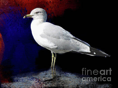 Ring Billed Gull by Linda Cox