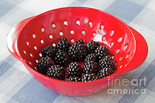 Ripe blackberries in a red dish by Louise Heusinkveld