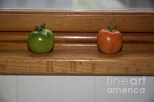 Ripening Tiny tomatoes by Ruth H Curtis