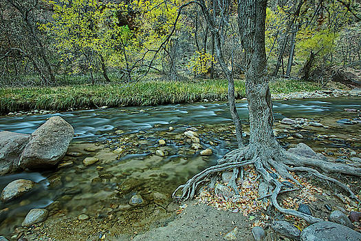 River, Rocks and Roots by Jurgen Lorenzen