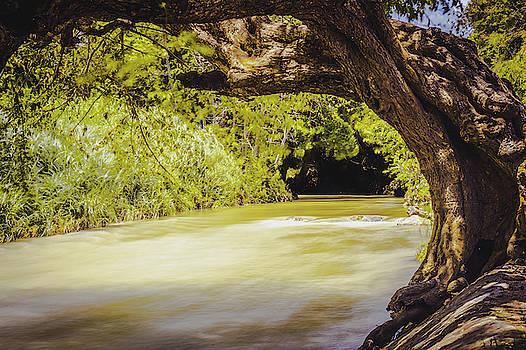 River Banks In Trelawny Jamaica by Debbie Ann Powell