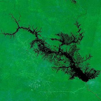 River Network in Amazon Jungle by Planet Impression