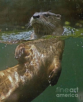 River Otter by Larry Nieland