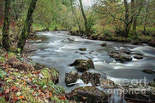 River Running Wild by David MM Williams