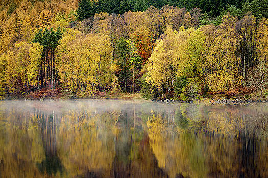 River Tummel Autumn Trees by Dave Bowman