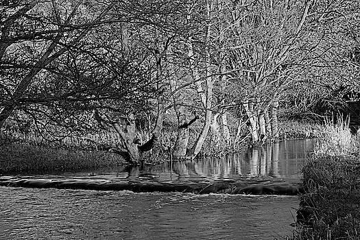 Riverside Trees - Wolfscote Dale by Rod Johnson