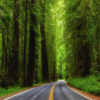Road through Avenue of the Giants by Jerry Fornarotto
