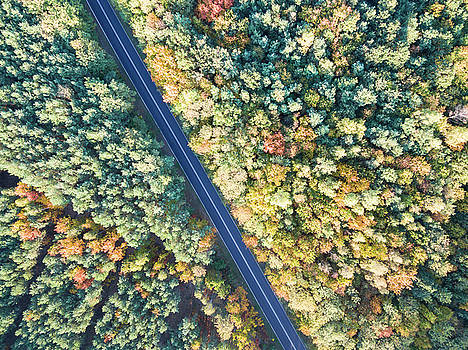 Road through colorful autumn forest by Lukasz Szczepanski