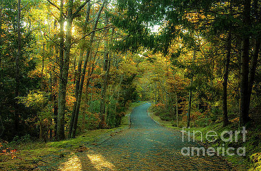 Road Through The Woods  by Sharon Mayhak