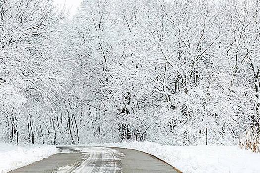 Road Through Winter by Terri Morris