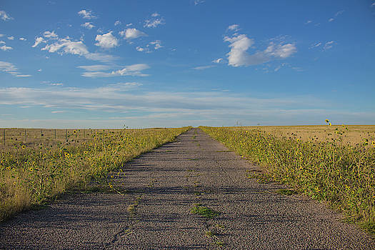 Road to Nowhere by Traci Asaurus