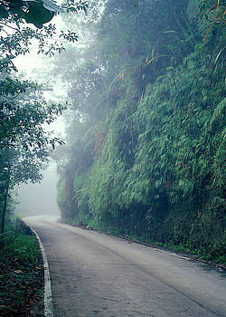 Road with ferns by Eugenio Opitz