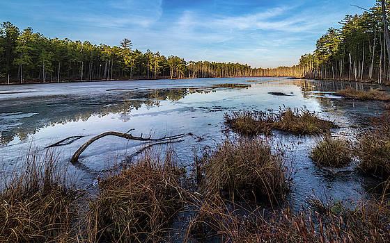 Louis Dallara - Roberts branch Pine lands