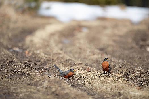 Robin Photobomb by Brian Hale