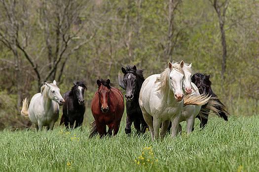 Rocky Creek Herd in Spring by Holly Ross