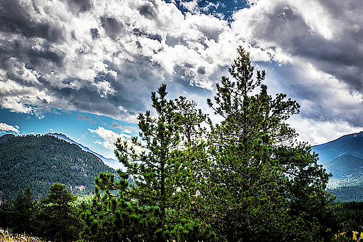Rocky Mountain Pines by James L Bartlett