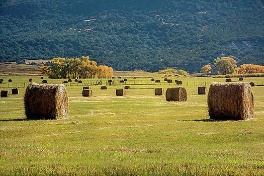 Rolled Hay Bales by John Bartelt
