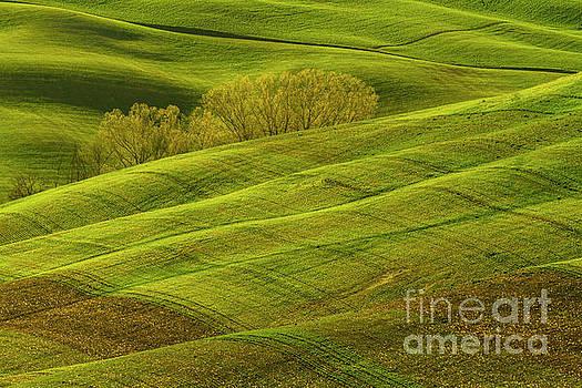 Heiko Koehrer-Wagner - Rolling Grassy Landscape Tuscany-1