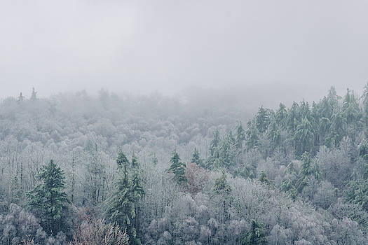 Rolling hills are filled with Evergreens mixed with white icy trees by Ryan Hoel