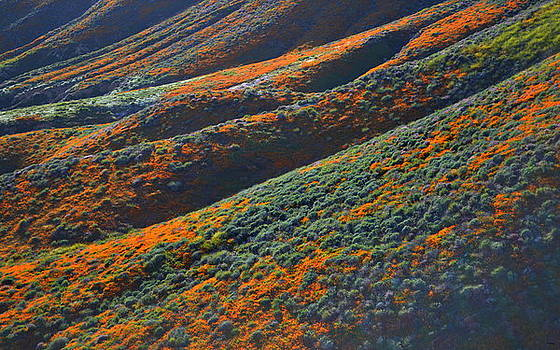 Glenn McCarthy Art and Photography - Rolling Hillsides Of Color