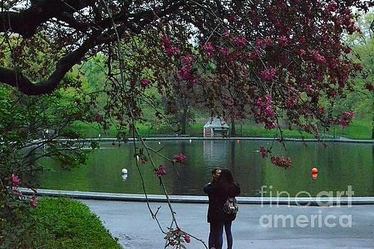 Romance in the Twilight - Central Park New York by Miriam Danar
