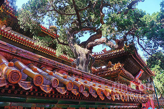 Roof Detail in the Imperial Garden by George Oze