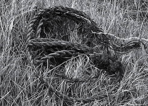 Rope In The Grass by Jeff Townsend