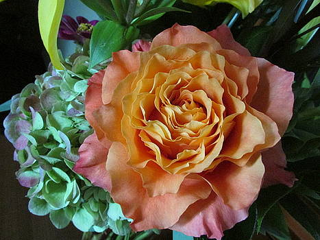 Rose and Hydrangea by Laura Nance