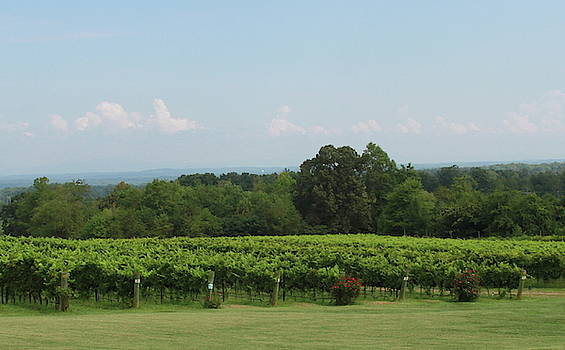 Cathy Lindsey - Rose Bushes and Grape Vine Rows 5
