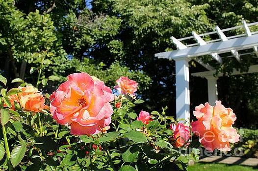 Rose Garden II by Denise Irving