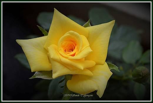 Rose of Hope by Sonali Gangane