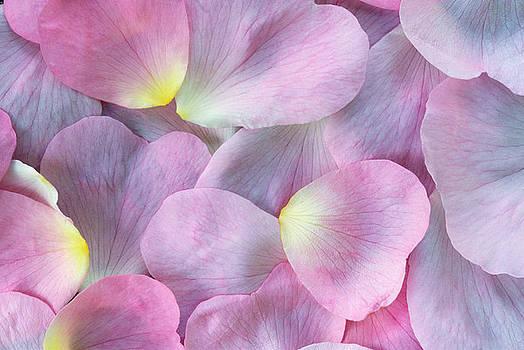 Rose Petals by Martin Ruegner