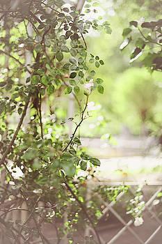 Jenny Rainbow - Rose Trellis in Franciscan Garden