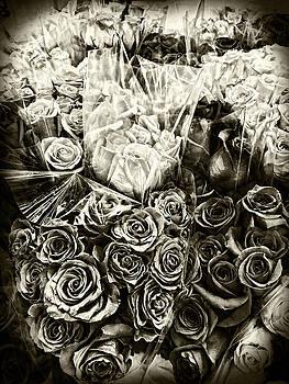 Sharon Popek - Roses in Sepia