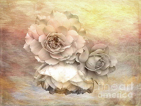 Roses by Lynn Bolt