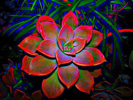 Rosette Succulant by Mark J Dunn