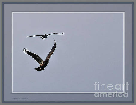 Sandra Huston - Round Two Osprey Verses Eagle, Framed