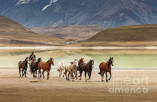 Rounding up the horses by Patti Schulze