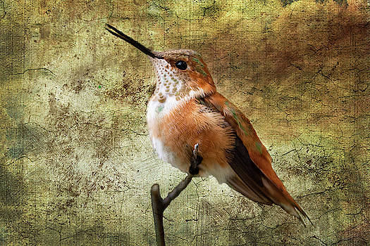 Barbara Manis - Rufus Hummingbird