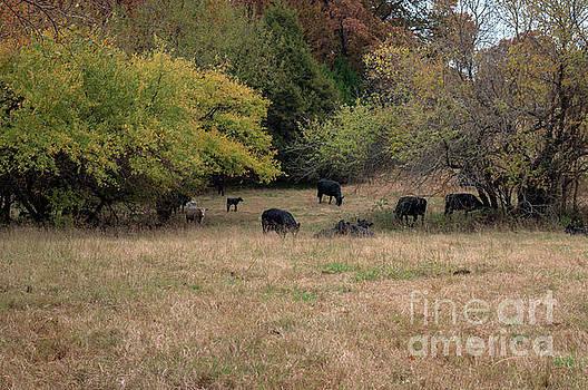 Rural life by Diane Friend