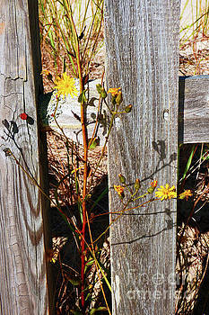 Sharon Williams Eng - Rustic Fence and Wildflowers 300