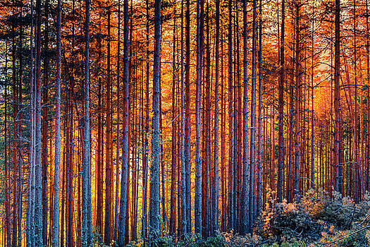 Rusy Forest by Evgeni Dinev